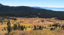 Tahoe Meadows